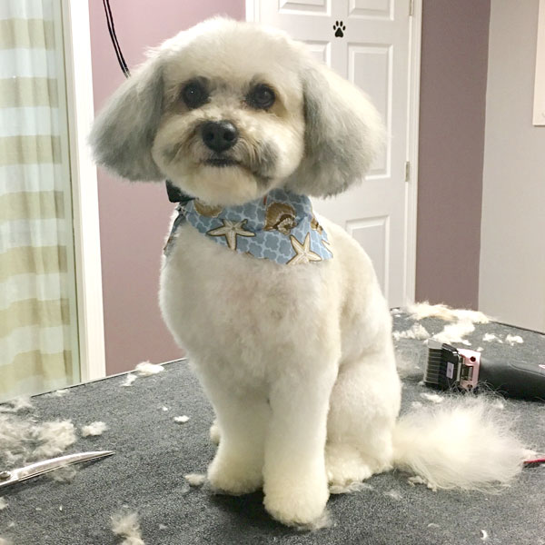 DowntownDogGrooming-FullGroom